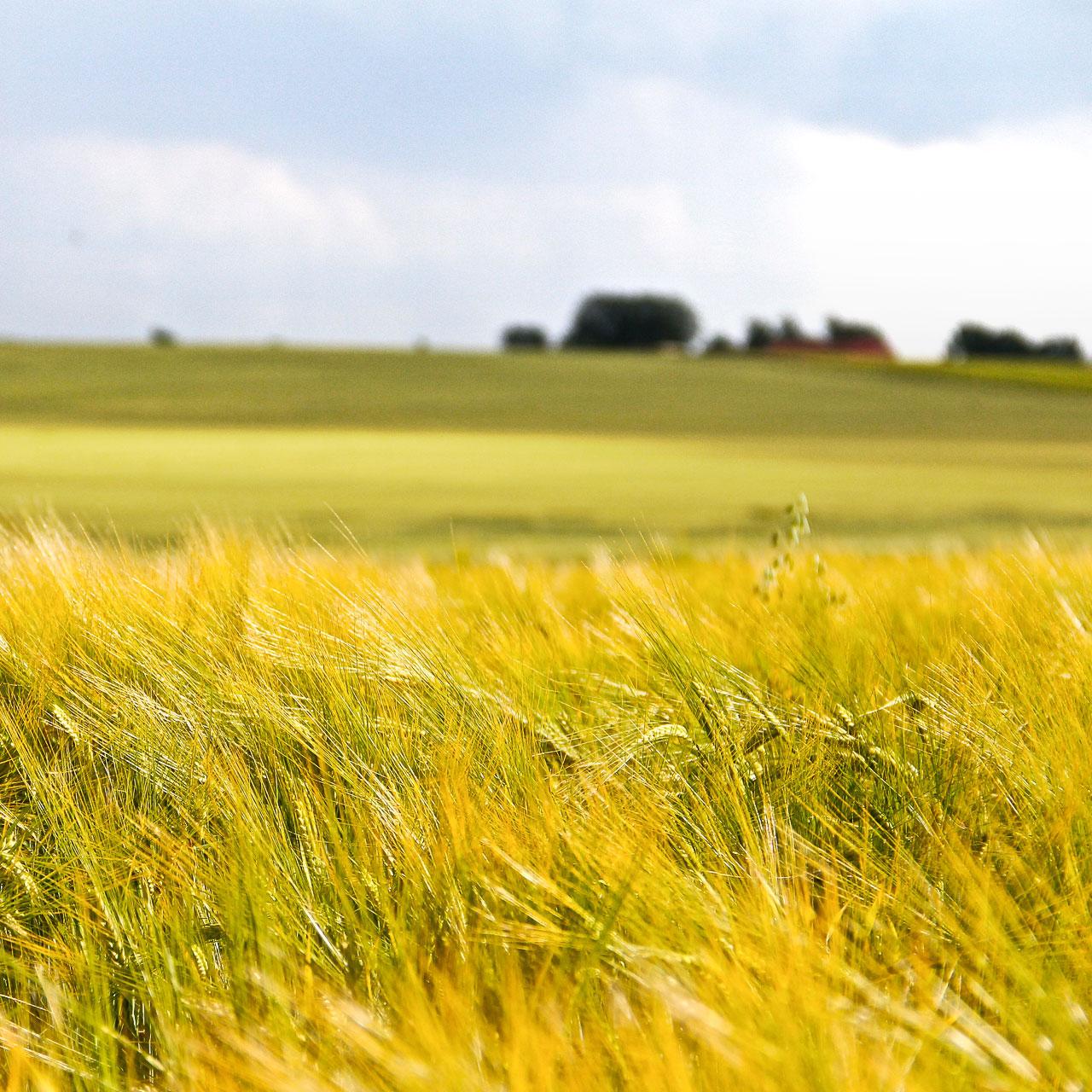 Minska miljöpåverkan och bidra till ett mer hållbart samhälle